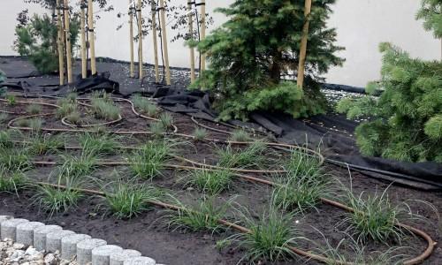 linia kroplująca nawadniania roslin green bud