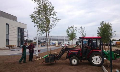 transport drzew 2