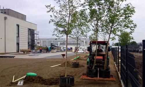 transport drzew